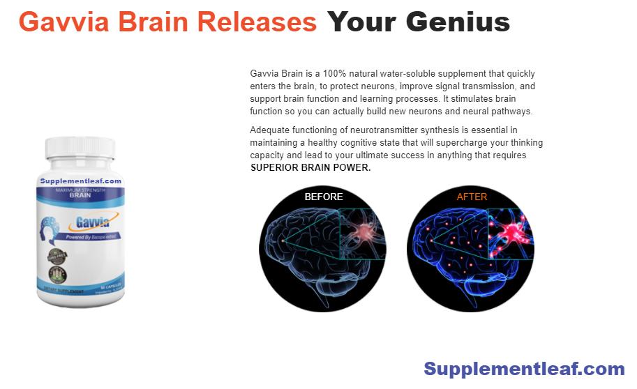Gavvia brain